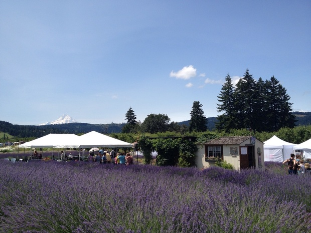 Hood River Lavender Farms