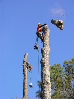 Tree Pros, INC